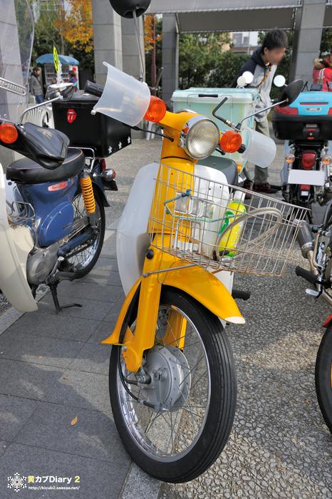5_yellowcub.jpg