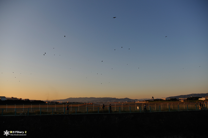 6_birdstrike.jpg